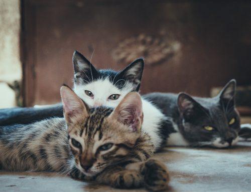 O que comem os gatos?