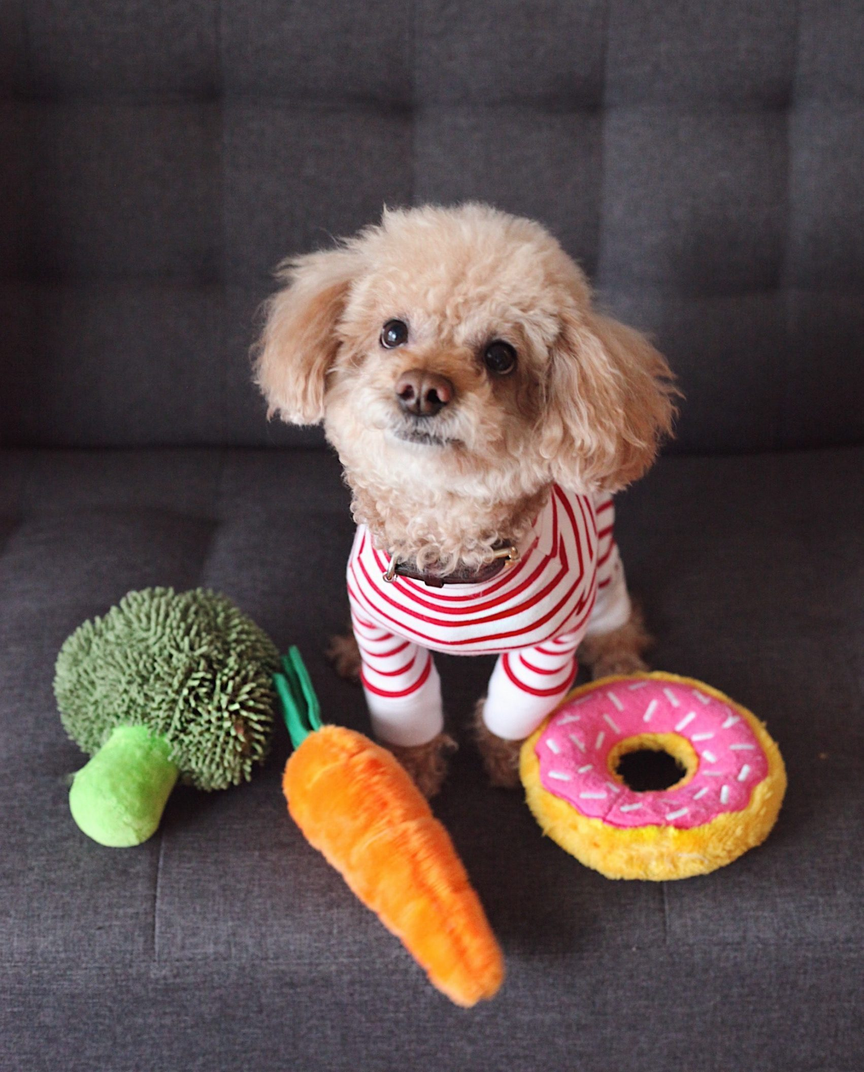 cão com comida natural saudável de brincar