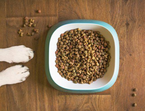 Sabe a origem da proteína animal na ração que compra?