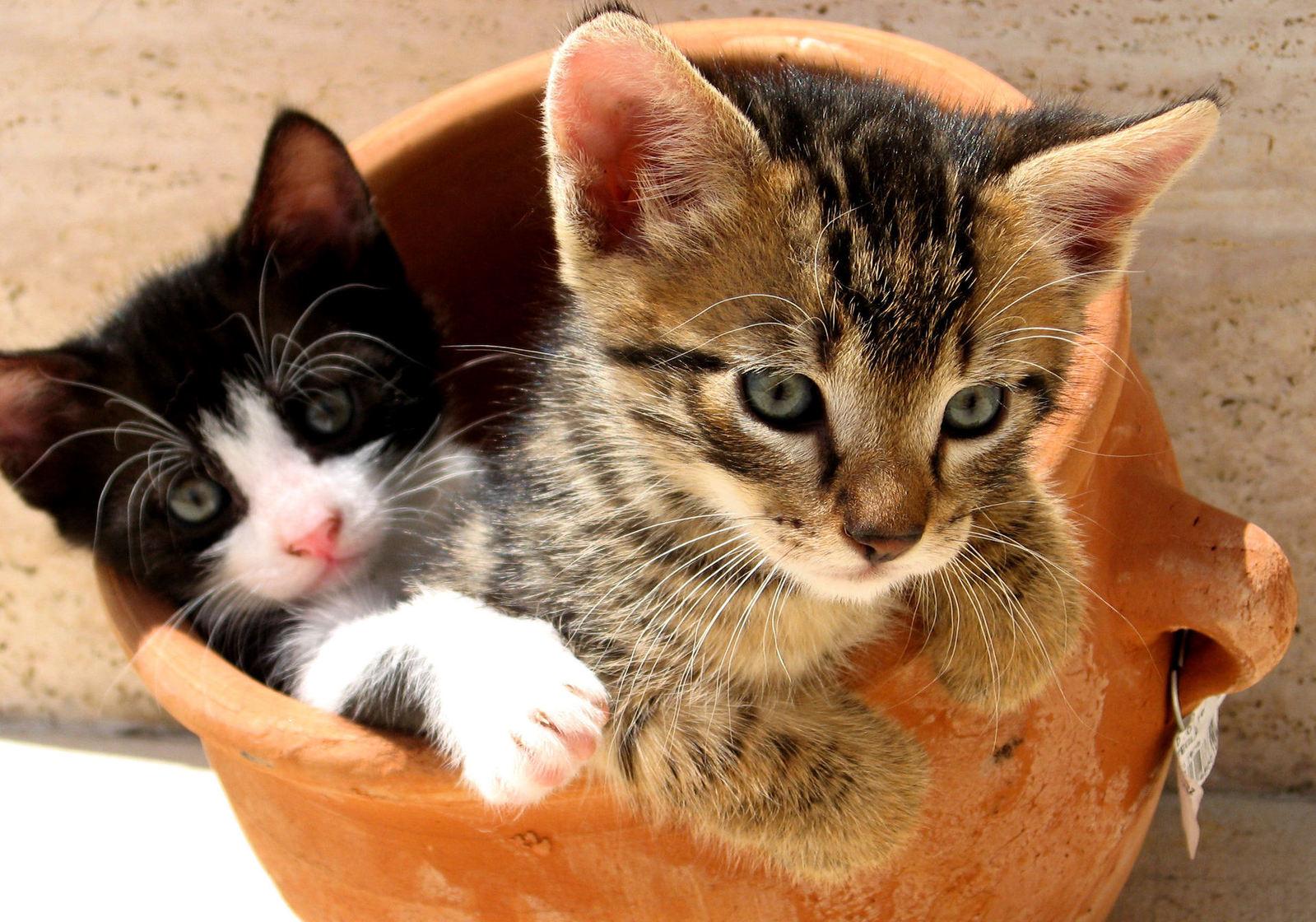 gato saudável atento