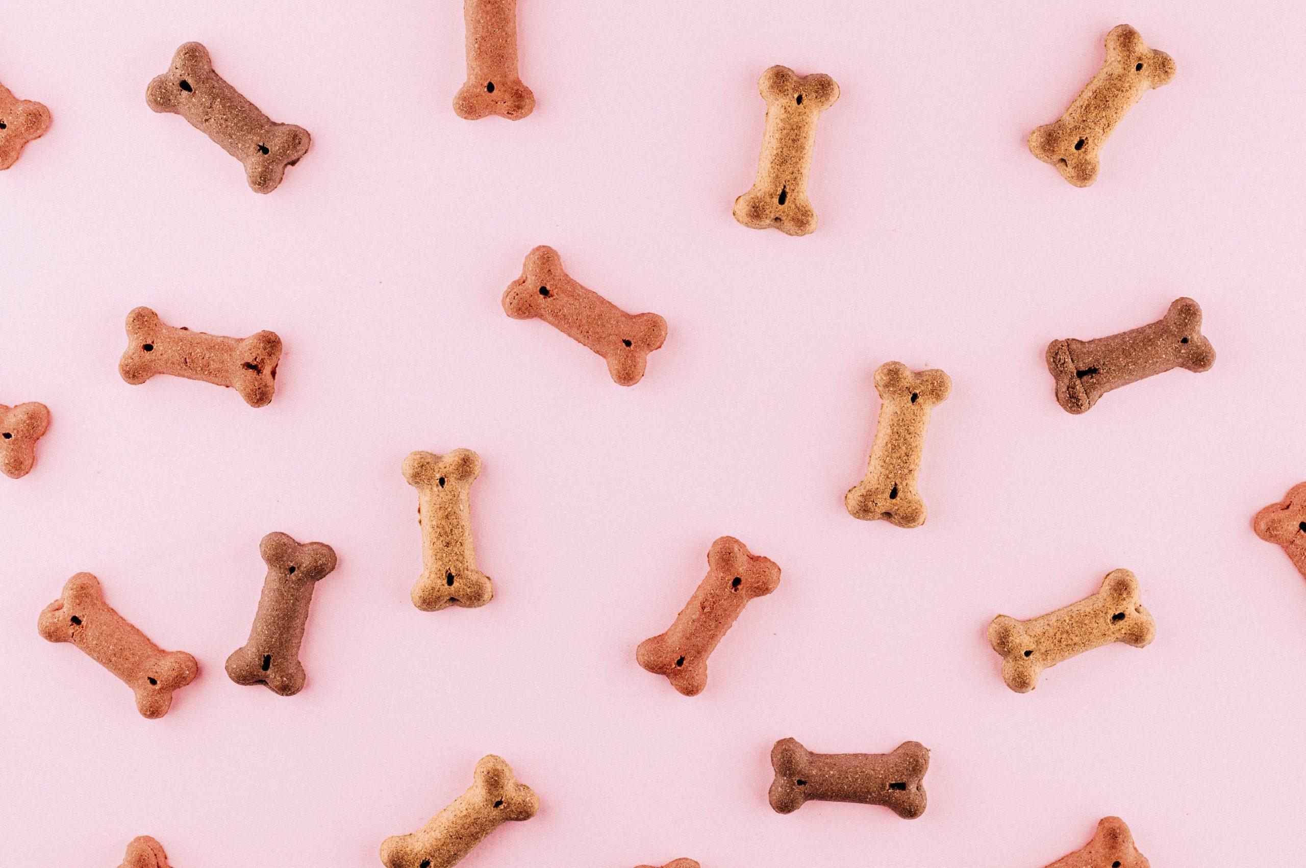 snacks cão