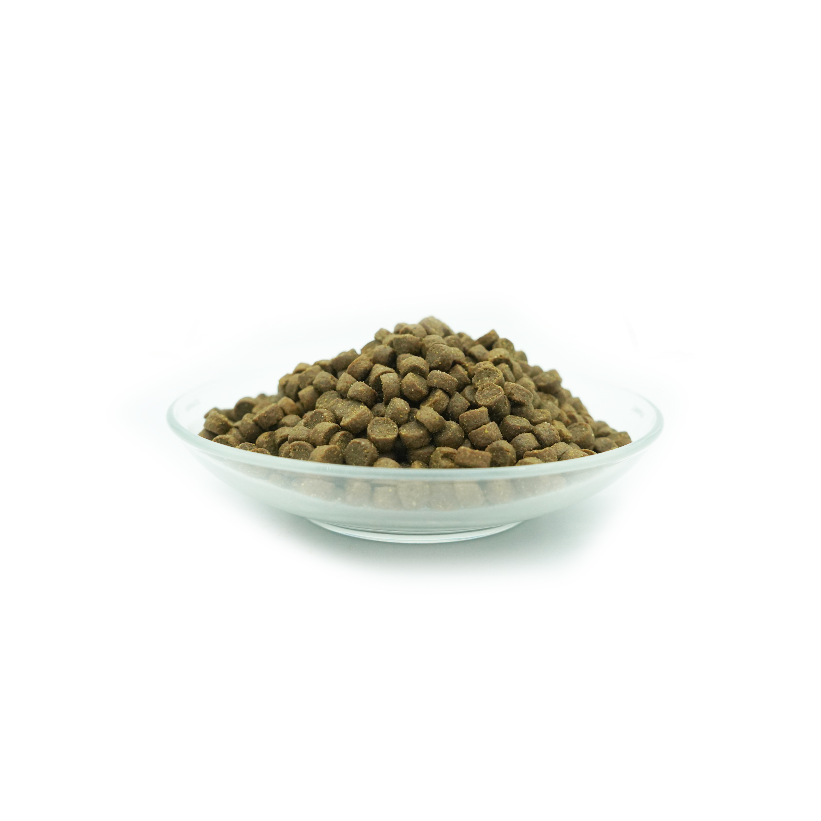comida de insecto para cão raça pequena